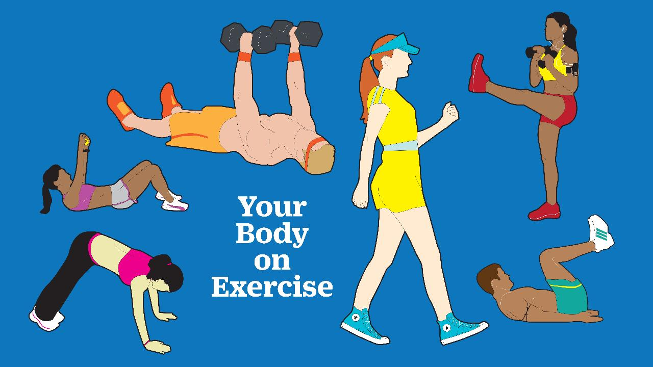 the effects of physical exercise on the human body Investigate the effect of exercise on the breathing rate or pulse rate of a human investigate the effect of exercise on the pulse rate of a human do not attempt this activity if you have a health problem or if you are recovering from an illness materials/equipment pulse monitor (optional) timer.