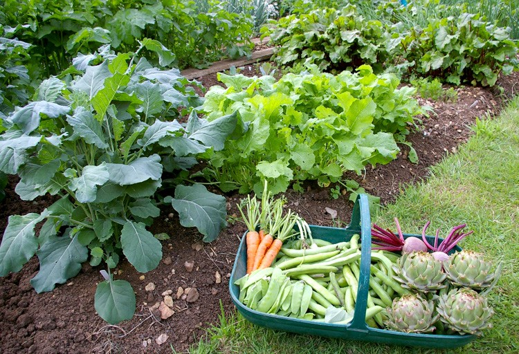 Health Tips: How Growing Your Own Garden Impacts Your Health » The ...