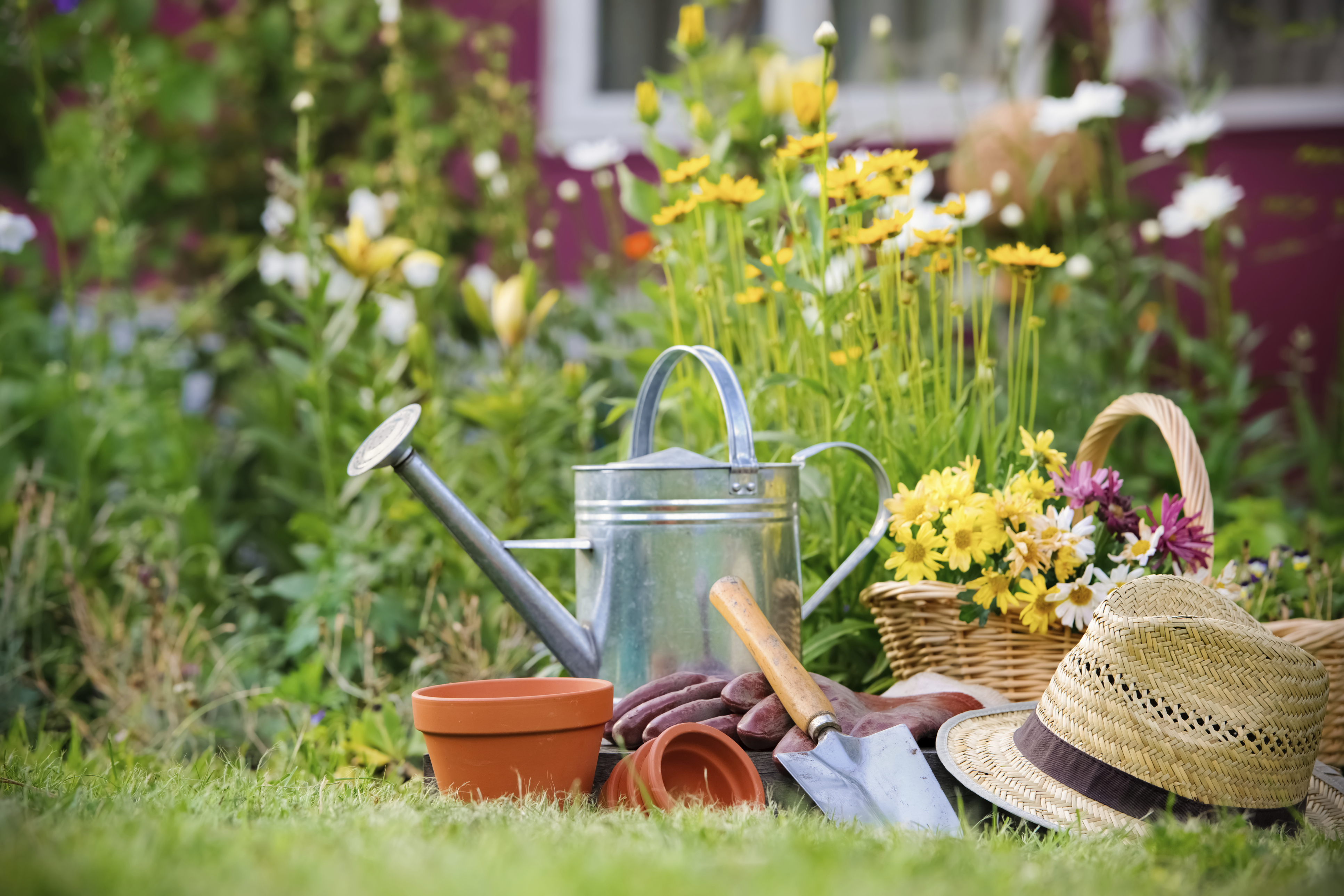 A Beginners Guide To Starting A Vegetable Garden The Culture
